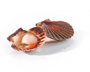 coquilles-st-jacques_800